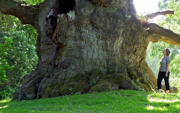 Oldest Living Big Cat